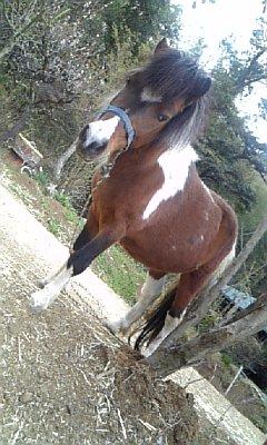 お馬さん♪.jpg